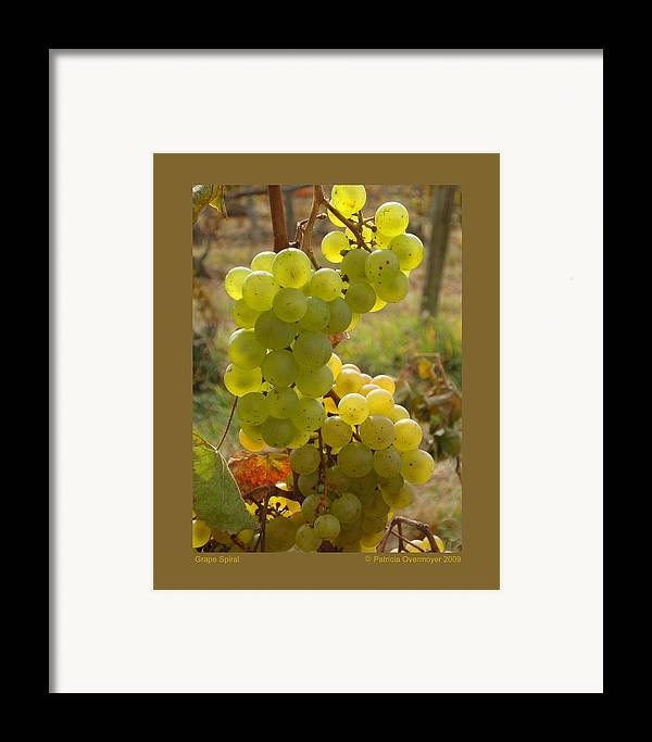 Grapes Framed Print featuring the photograph Grape Spiral by Patricia Overmoyer
