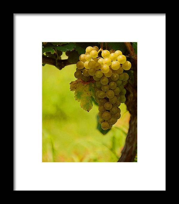 Grapes Framed Print featuring the photograph Grapes by Travis Aston