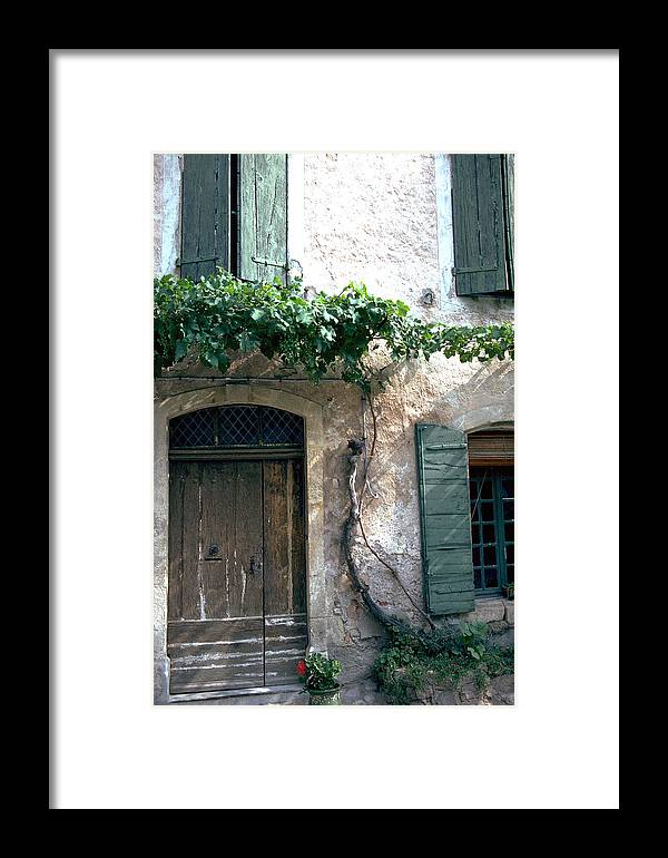 Grapevine Framed Print featuring the photograph Grapevine by Flavia Westerwelle