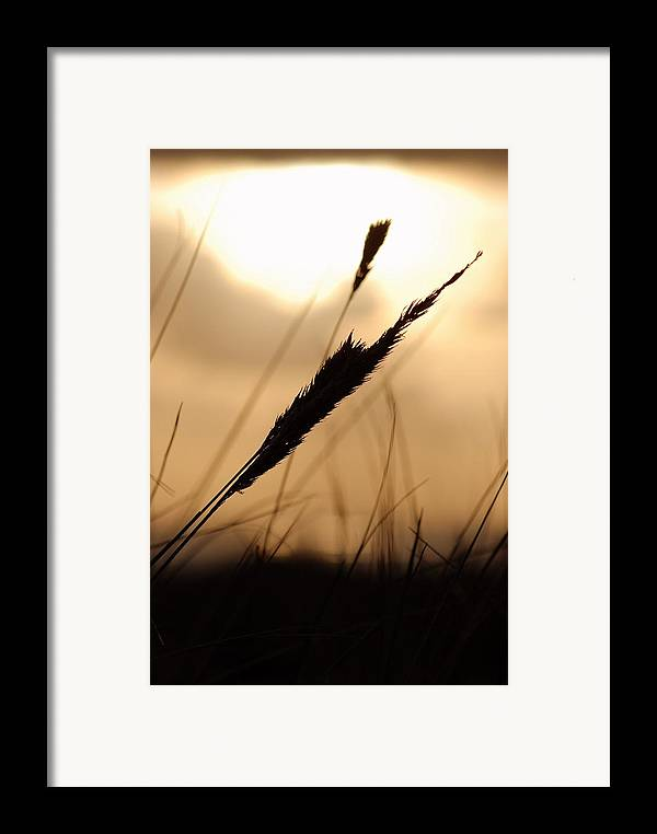 Framed Print featuring the photograph Grass by JK Photography