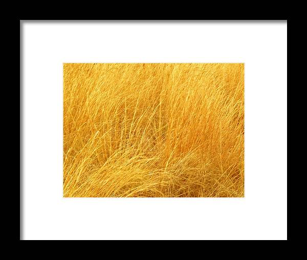 Sun Shades On Grass Framed Print featuring the photograph Grass Shades by Kim Zwick