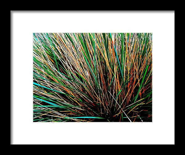 Grass Tussock Framed Print featuring the photograph Grass Tussock by Colin Drysdale