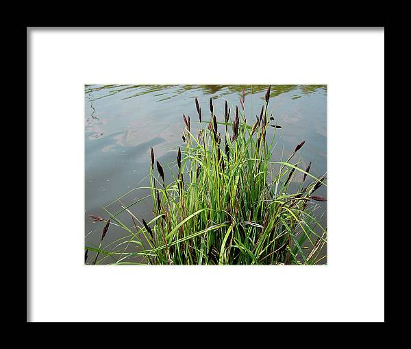 Outdoors Framed Print featuring the photograph Grasses With Seed Heads by Rod Johnson