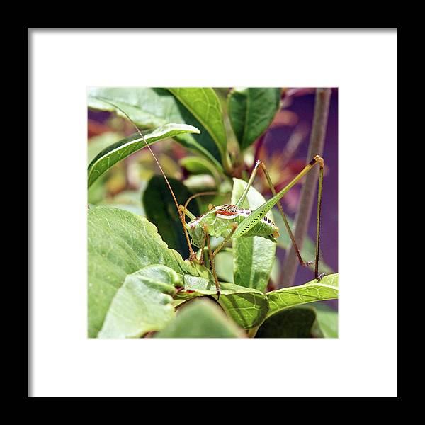 Grasshopper Framed Print featuring the photograph Grasshopper by David G Paul