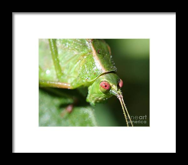 Grasshopper Framed Print featuring the photograph Grasshopper by Wingsdomain Art and Photography