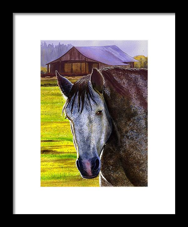 Horse Framed Print featuring the painting Gray Horse by Catherine G McElroy