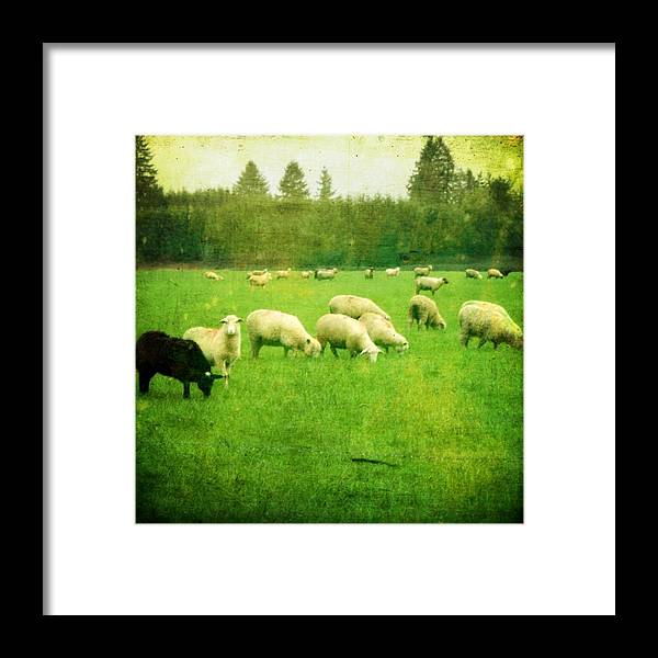 Nature Framed Print featuring the photograph Grazing by Cathie Tyler