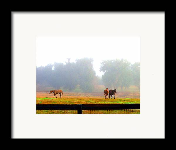 Horses Framed Print featuring the photograph Grazing by Judy Waller