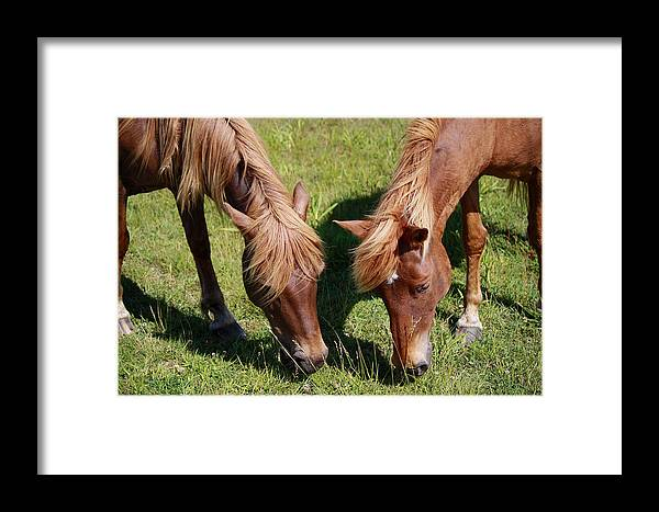 Horses Framed Print featuring the photograph Grazing Together by Deborah Napelitano