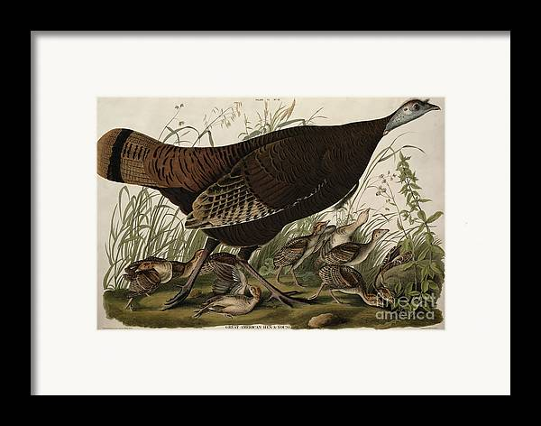 Great American Hen And Young Framed Print featuring the painting Great American Hen And Young by John James Audubon