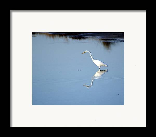 Birds Framed Print featuring the photograph Great Blue 2 by Marty Koch