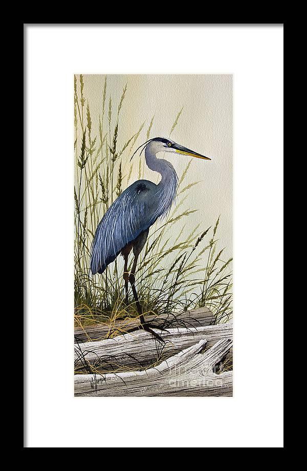 Great Blue Heron Splendor Framed Print by James Williamson