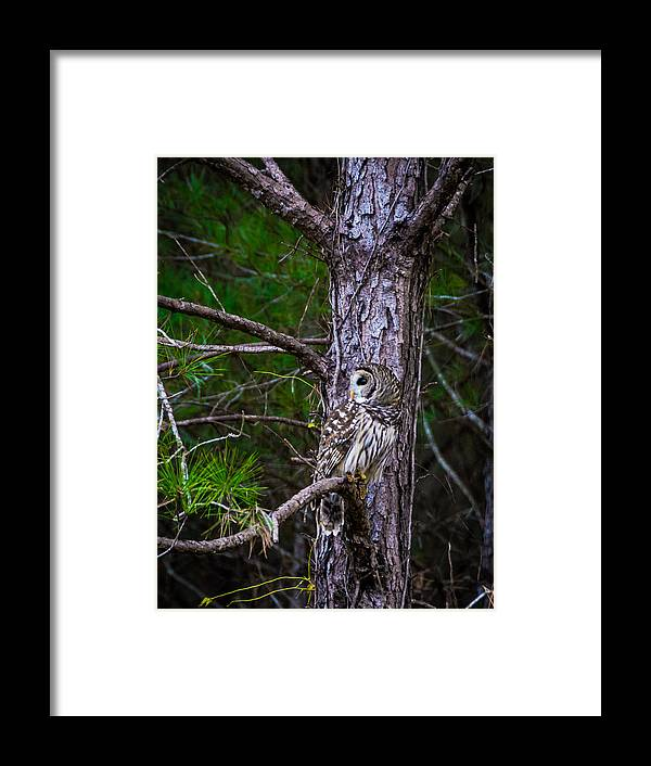 Wildlife Framed Print featuring the photograph Great Camo by Alicia Collins