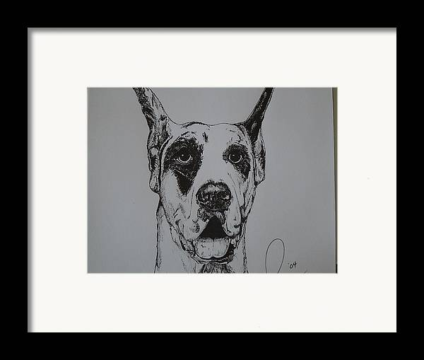 Dogs Framed Print featuring the drawing Great Dane by Raymond Nash