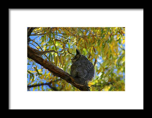 Large Framed Print featuring the photograph Great Horned Owl 2 by Teresa Stallings