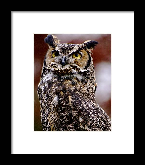 Rapture Framed Print featuring the photograph Great Horned Owl by Sonja Anderson