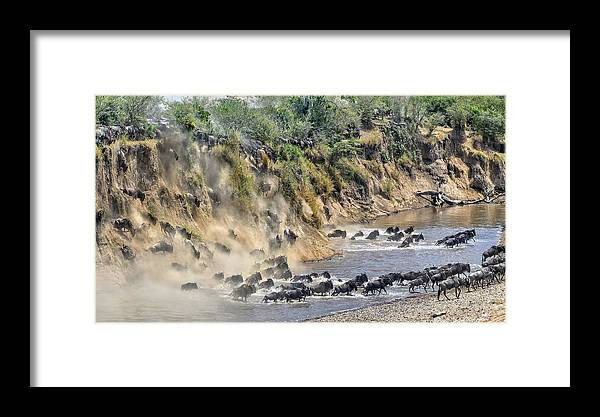 Nature Framed Print featuring the photograph Great Migration by Hua Zhu