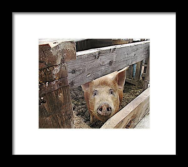 Barnpig Framed Print featuring the photograph Green Acres by Faith Harron Boudreau