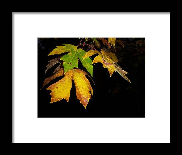 Autumn Framed Print featuring the photograph Green And Yellow by Ken Day