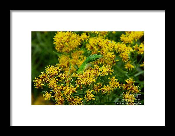 Green Anole Framed Print featuring the photograph Green Anole Hiding In Golden Rod by Barbara Bowen