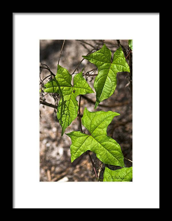 Green Framed Print featuring the photograph Green Arrowheads by Christopher Holmes