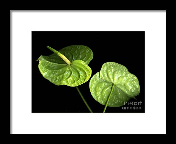 Botanicals Framed Print featuring the photograph Green Berets by Christian Slanec
