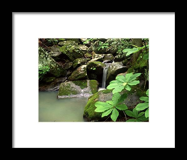 Framed Print featuring the photograph Green by Curtis J Neeley Jr
