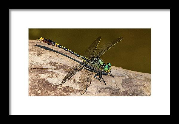 Dragonfly Framed Print featuring the photograph Green Dragonfly by William Krumpelman