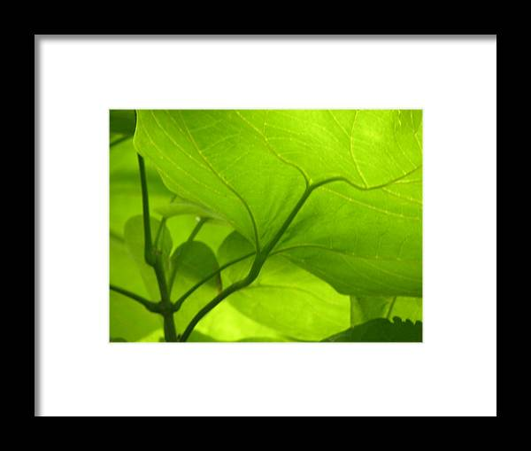 Photography Framed Print featuring the photograph Green by Evan Pullins