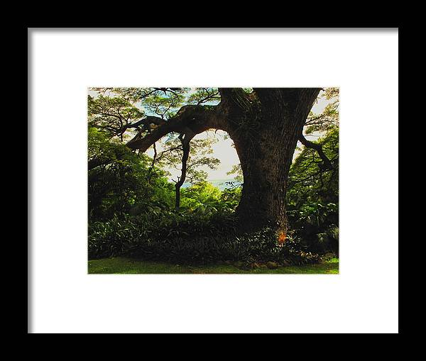 Tropical Framed Print featuring the photograph Green Giant by Ian MacDonald