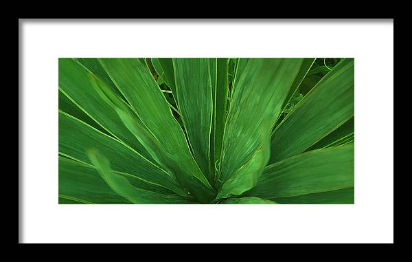 Green Plant Framed Print featuring the photograph Green Glow by Linda Sannuti