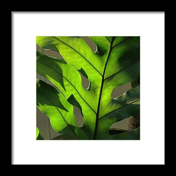 Green Leaf Framed Print featuring the photograph Green Green Green by Pamela Bushnell