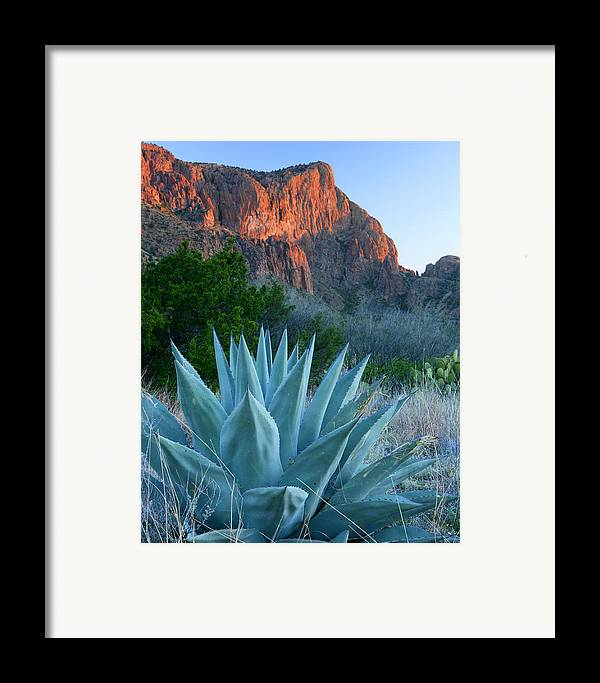 Texas Framed Print featuring the photograph Green Gulch Agave by Eric Foltz