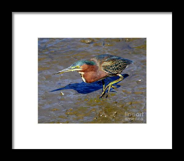Wild Life Framed Print featuring the photograph Green Heron by Irina Hays