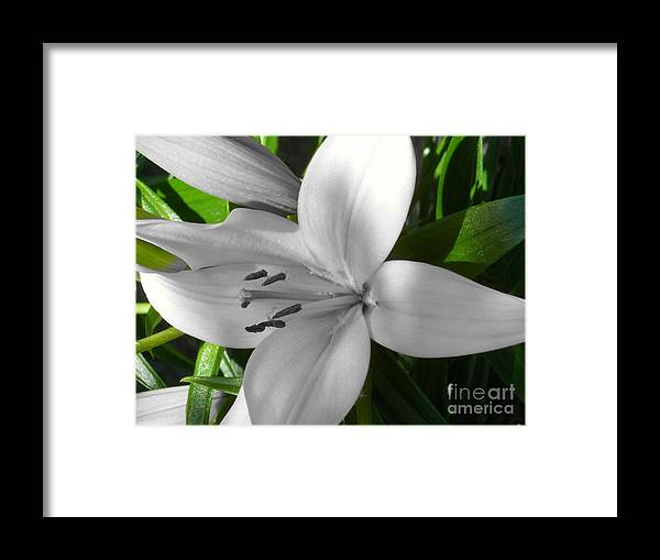 Digital+tint Framed Print featuring the photograph Green Highlighted Lily by Sonya Chalmers