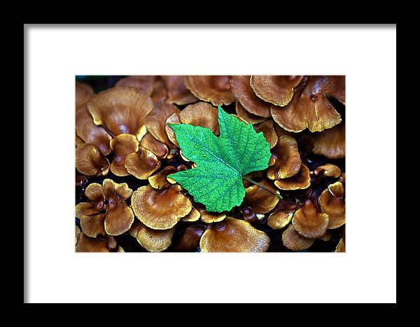 Nature Framed Print featuring the photograph Green Leaf On Fungus by Carl Purcell