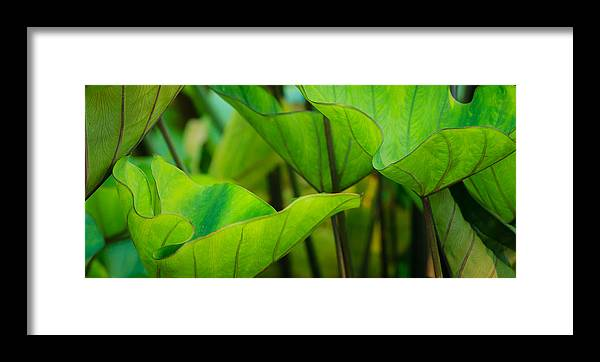 Cantigny Framed Print featuring the photograph Green Leaves At Cantigny by Joni Eskridge