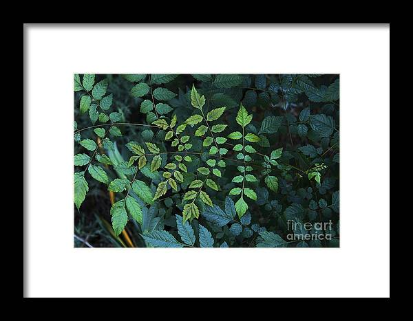 Nature Framed Print featuring the photograph Green Leaves by Viktor Savchenko