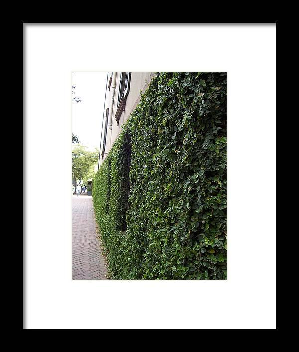 Beautiful Green Wall Framed Print featuring the photograph Green by Nereida Slesarchik Cedeno Wilcoxon