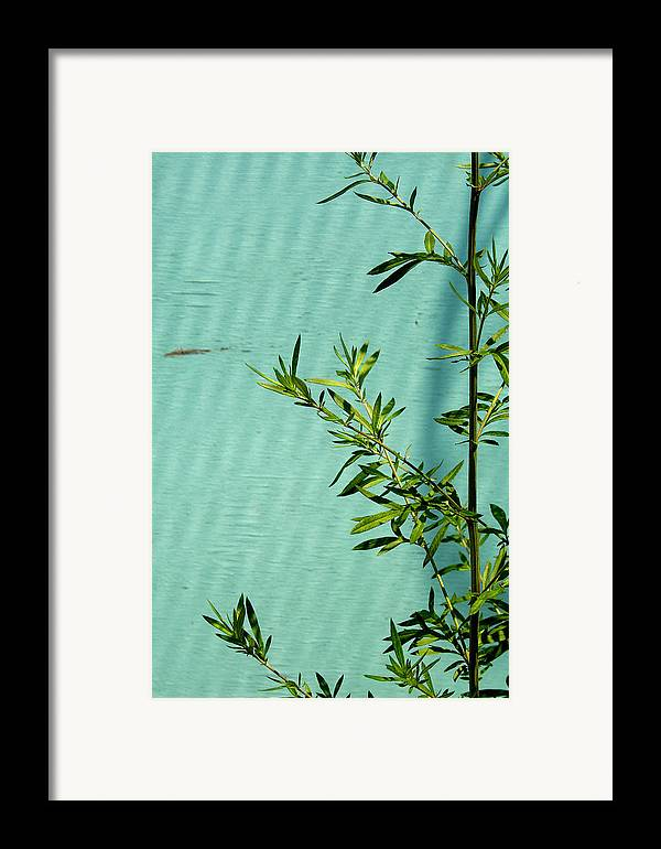 Green Framed Print featuring the photograph Green On Aqua 1 by Art Ferrier