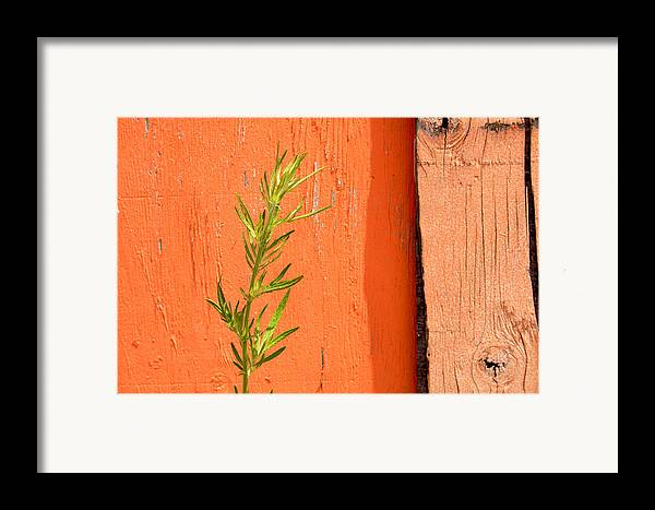 Color Framed Print featuring the photograph Green On Orange 2 by Art Ferrier