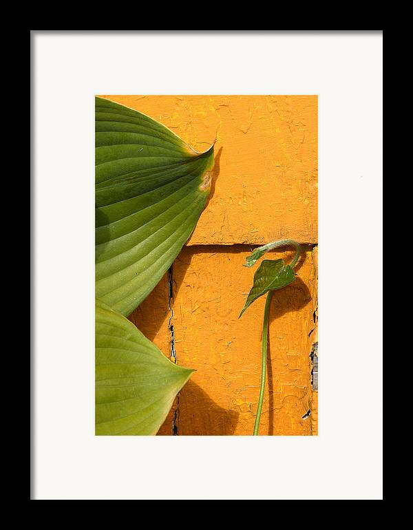 Color Framed Print featuring the photograph Green On Orange 4 by Art Ferrier