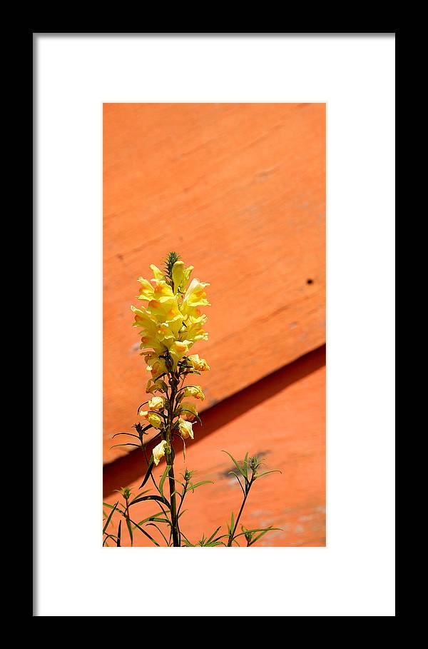 Color Framed Print featuring the photograph Green On Orange 5 by Art Ferrier