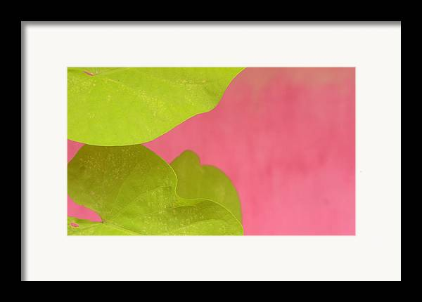 Color. Abstract Framed Print featuring the photograph Green On Pink 1 by Art Ferrier