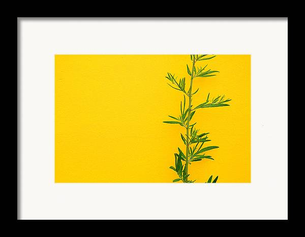 Color Framed Print featuring the photograph Green On Yellow 5 by Art Ferrier
