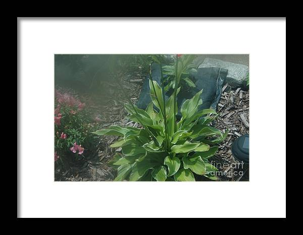 Abstract Framed Print featuring the photograph Green Plant And Pink Flowers by Alwyn Glasgow