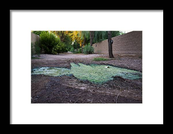 Green Framed Print featuring the photograph Green Puddle by Daniel Seok