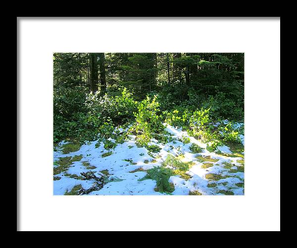 Olympic Peninsula Framed Print featuring the photograph Green Snow by George I Perez