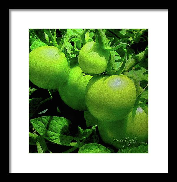 Green Tomatoes Framed Print featuring the digital art Green Tomatoes by James Temple