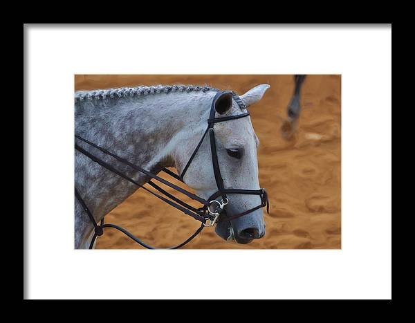 Horse Framed Print featuring the mixed media Grey by Bill Willemsen